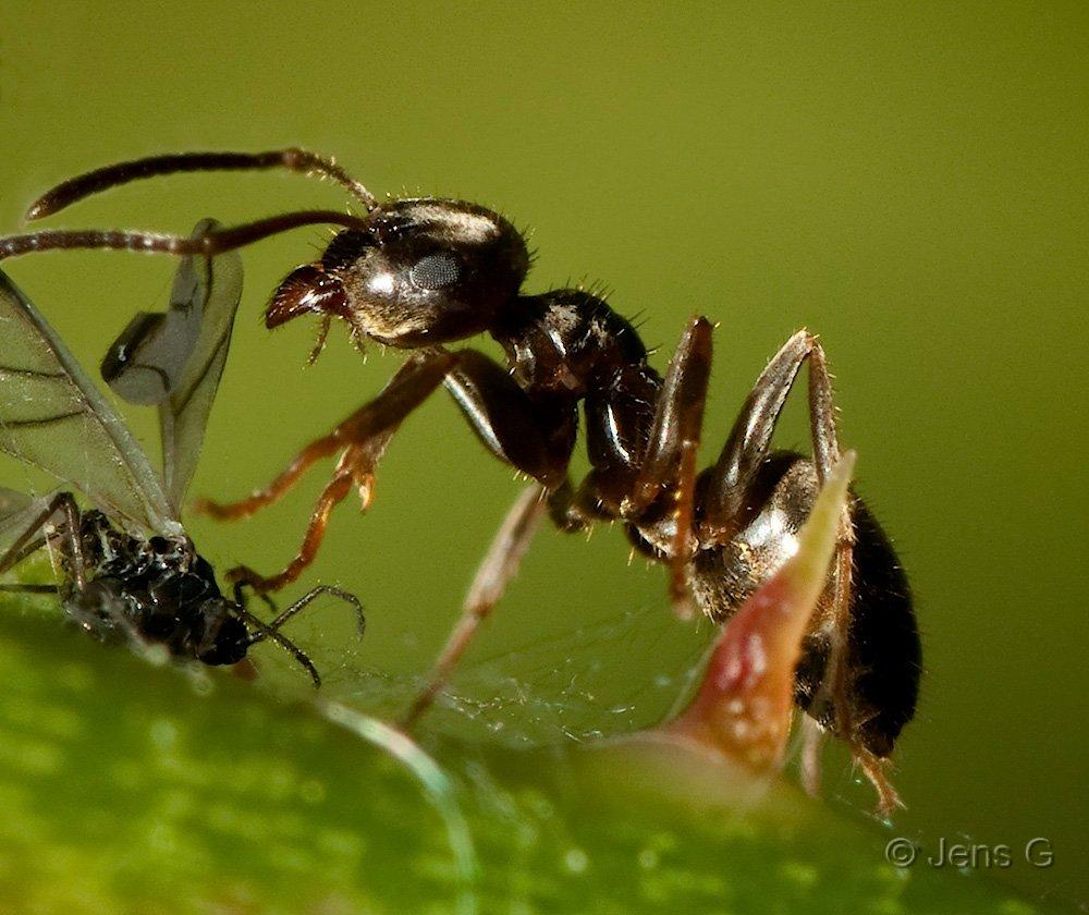 Myre med mad