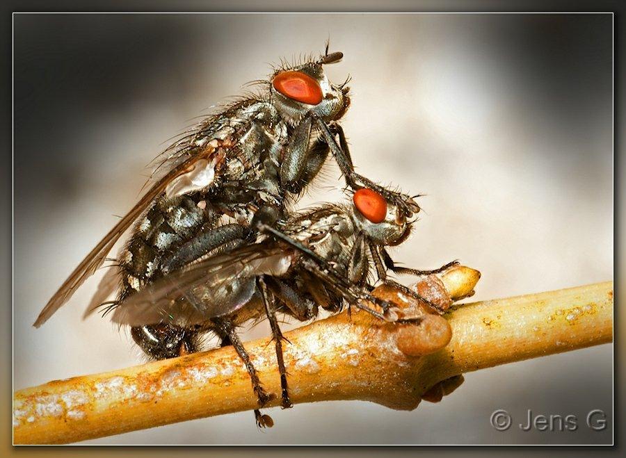 Fluer i et intimt øjeblik