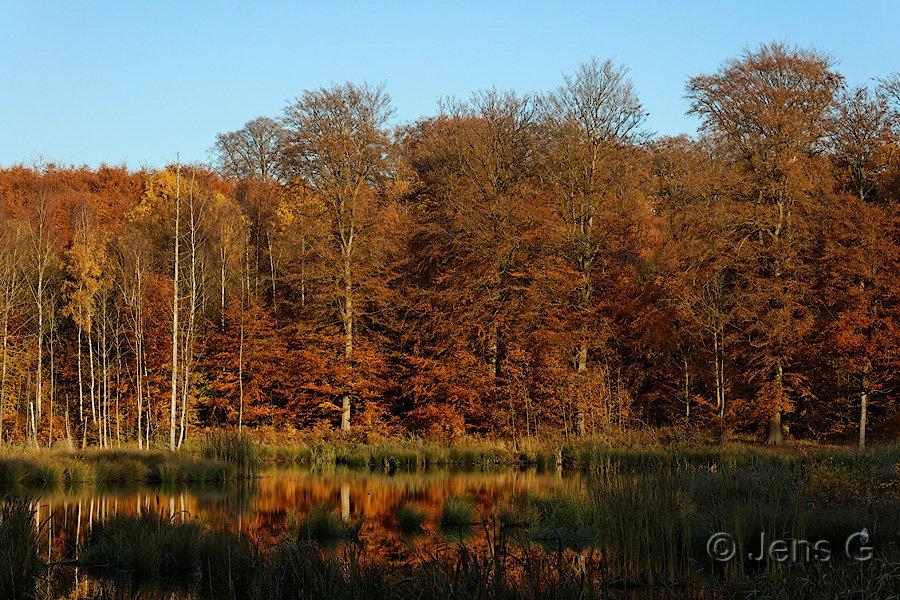 Efterår ved sø og skov