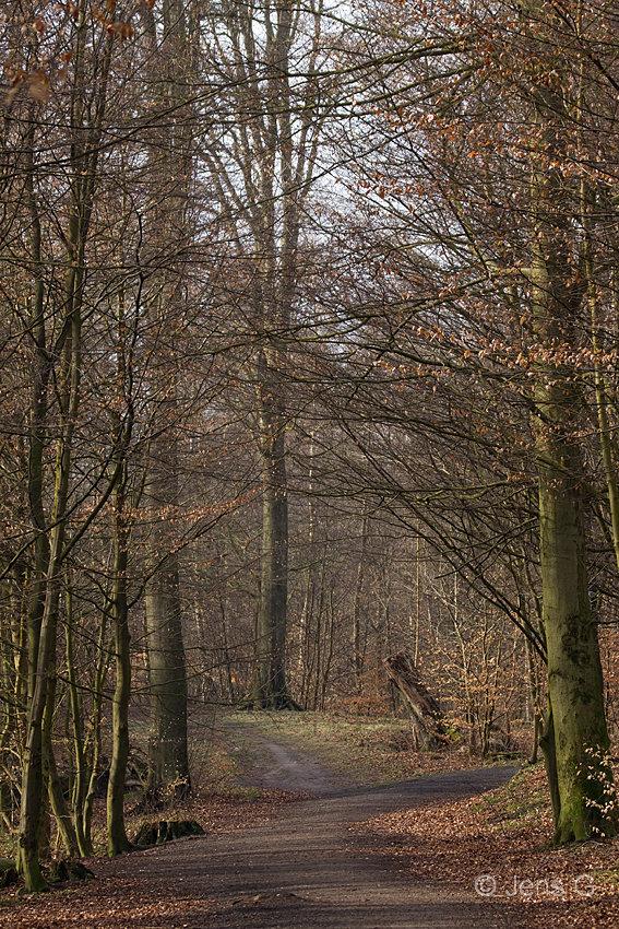 Skov i tidligt forår ligner efterår