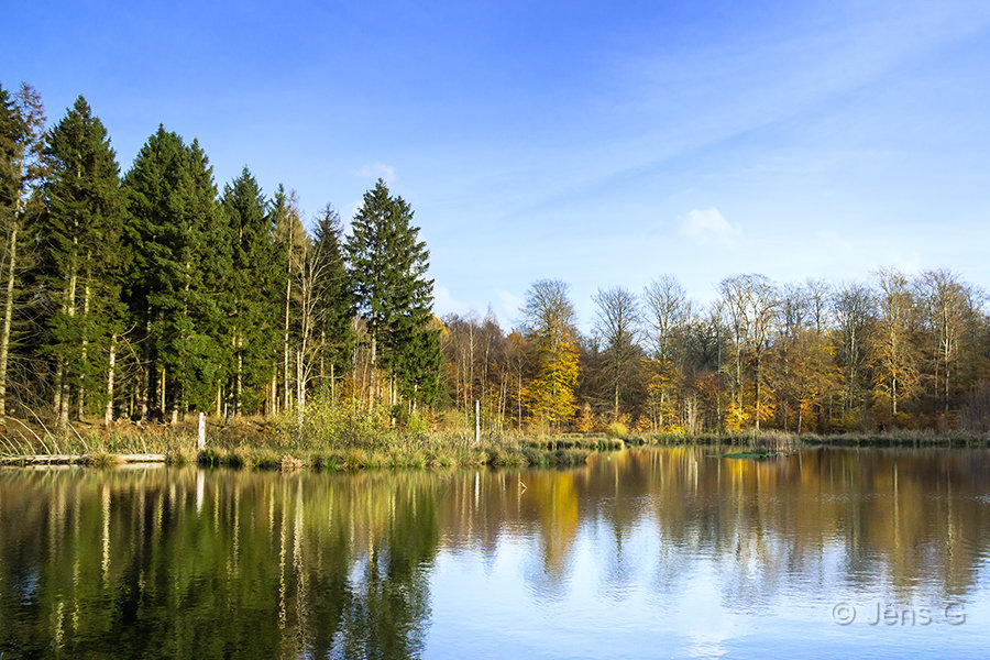 Skovsø og skov med efterårsfarver