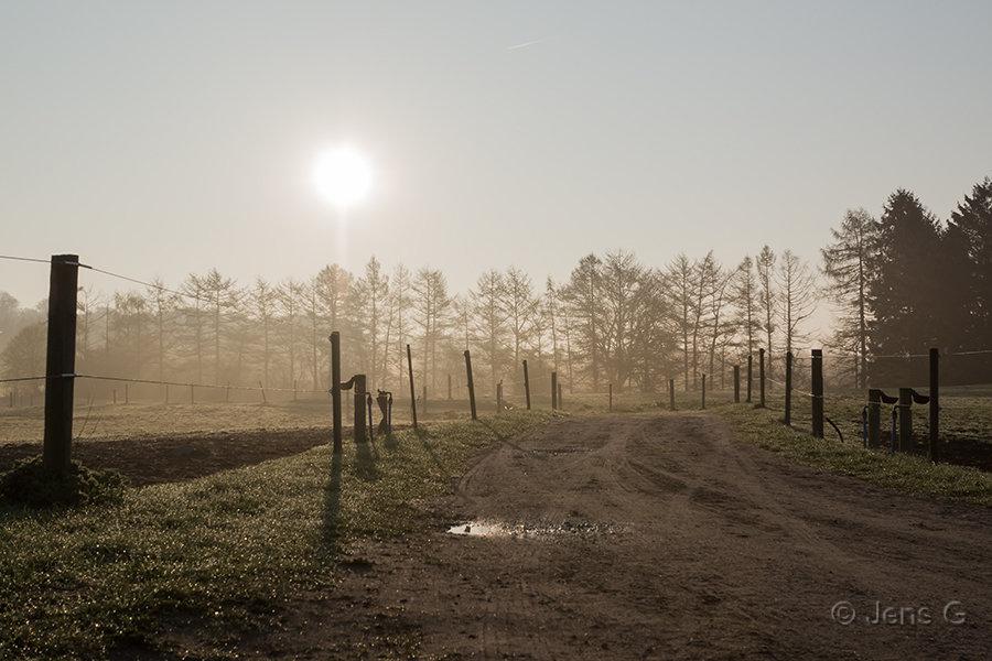 Grusvej og hestefolde i modlys