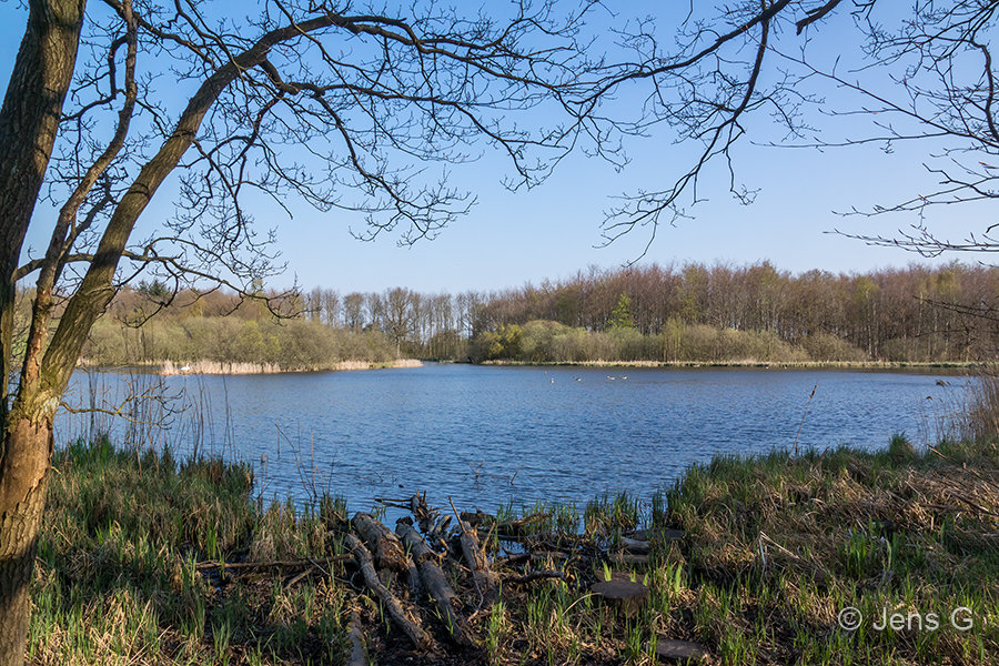 Skovsø