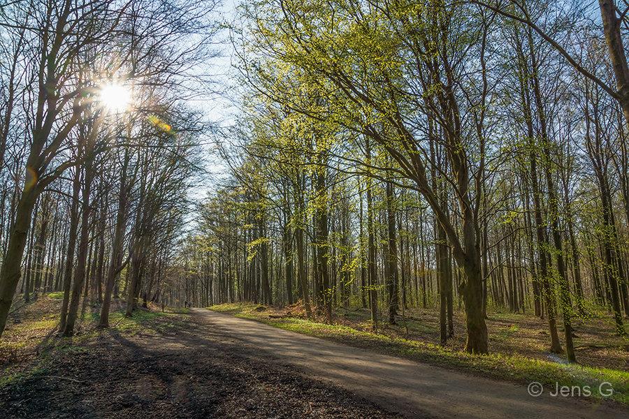Forårsskov i modlys