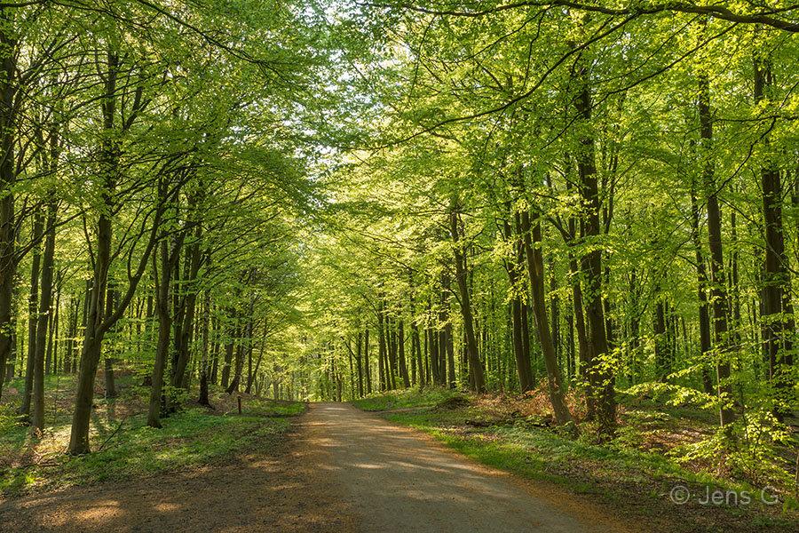 Forårsskov
