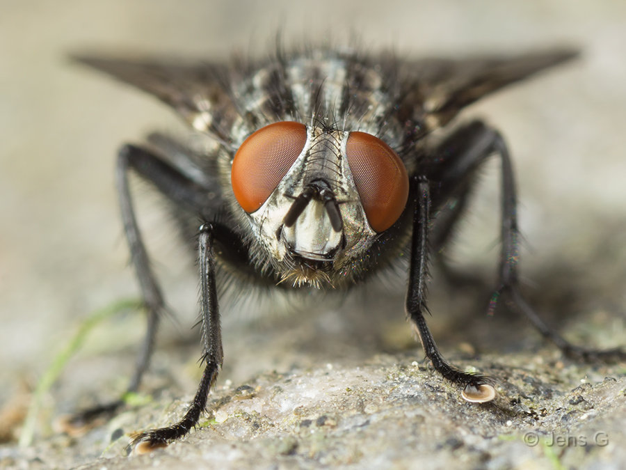 Flue set for fra