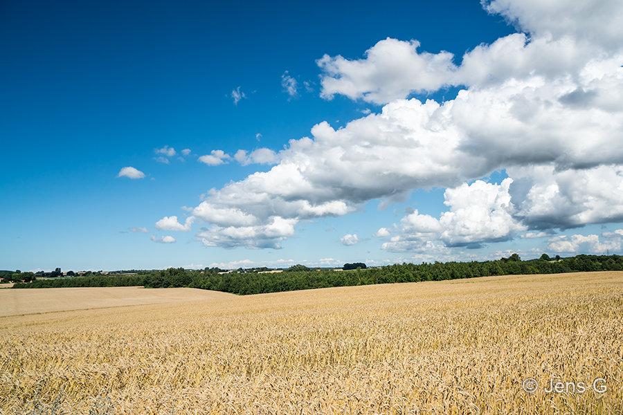 Moden kormark og drivende skyer