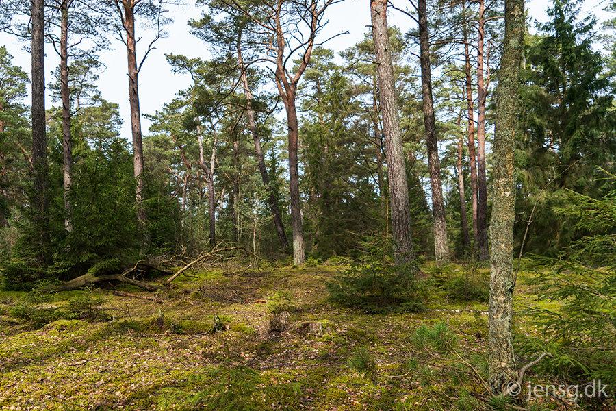 Skoven ved Asserbo i Nordsjælland
