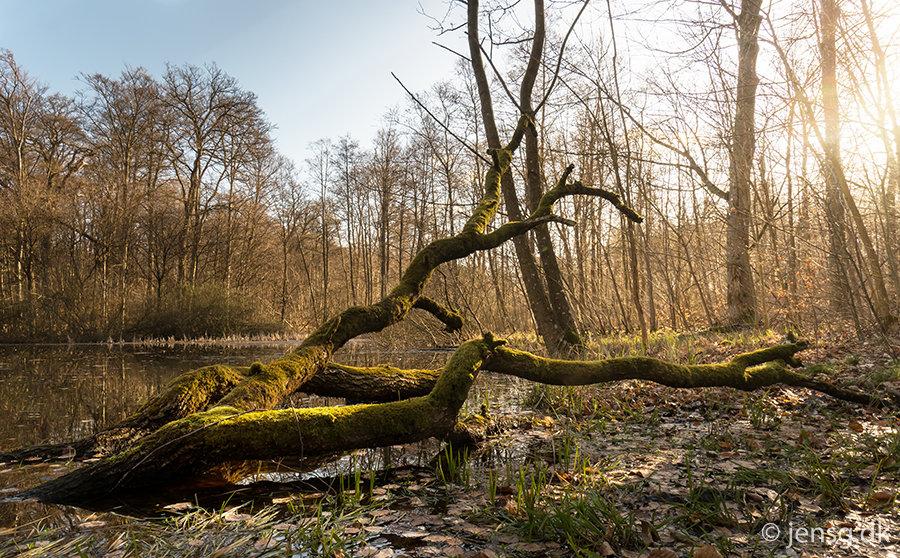Landskab og Natur