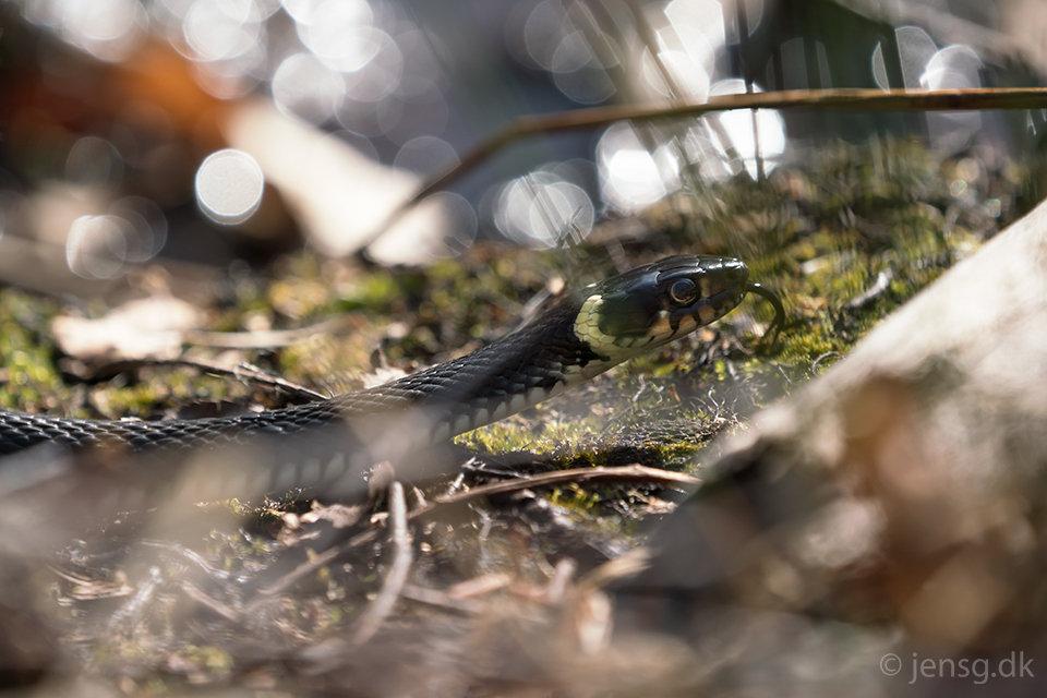 Snog i skovbunden